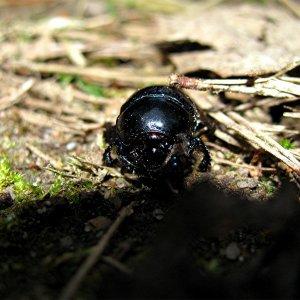 Die Käfersammlung