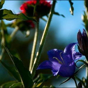 Durch die Blume gesehn