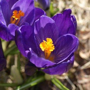 Frühlingsanfang nun auch in Schweden