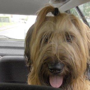 Schnappschuss Hund im Auto