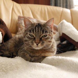 Katze mit Schlafzimmerblick