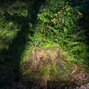 Licht Schattenspielt im dichten Wald