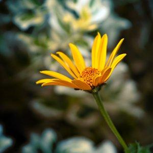 Blume12.jpg