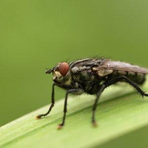 Kleine Fliege...