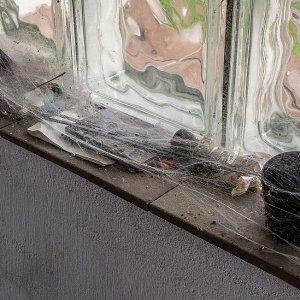 Halloween-das vergessene Fenster