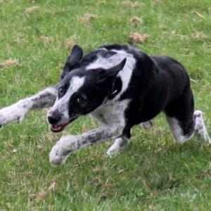 laufender Hund...
