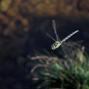 Noch eine Libelle