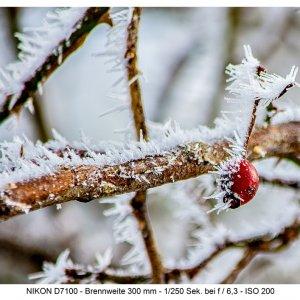 ....Winter , auch immer wieder schön