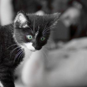 Katzenkind :)