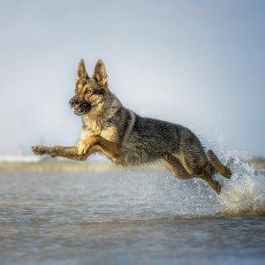 Wasserflughund