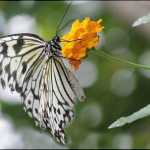 Im Schmetterlingshaus ....