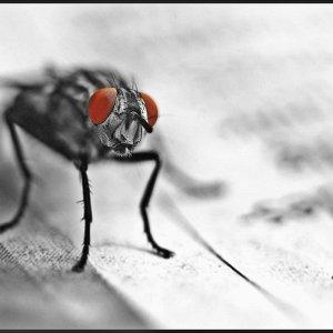 Fliege liest Zeitung ....