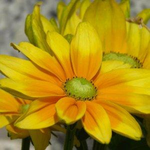 Frisches Gelb
