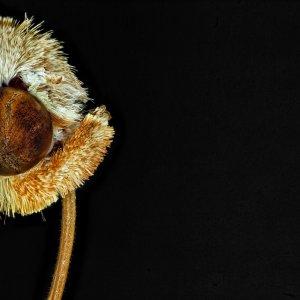Motte (Kopfportrait)