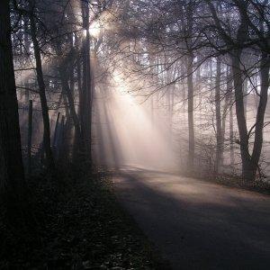 im Koblenzer Stadtwald