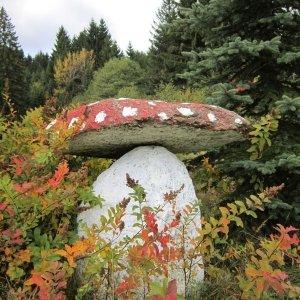 Riesenpilzfund , im Bayerischen Wald , nicht eßbar !