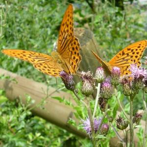 Teffen der Schmetterlinge