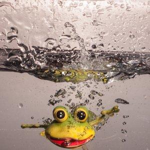war gassi mit meinem Frosch