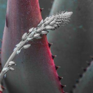 Makros aus dem Botanischen Garten