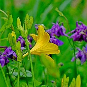Farben im Garten