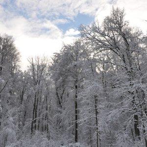 winterwald-b.jpg