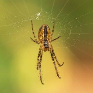 eine kleine Spinne 1:1 :)