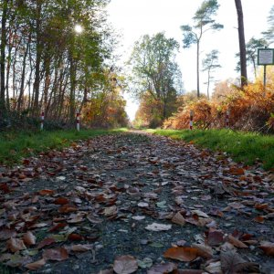 Waldweg am Niederrhein