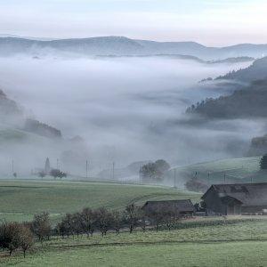 Nebelschwaden.jpg