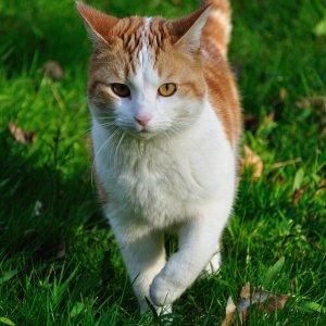 Katze Elke
