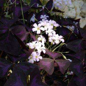 Meine Blumenwelt