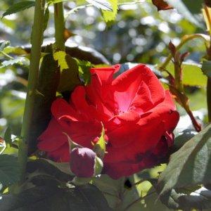 Noch ein paar weitere hübsche Blumen