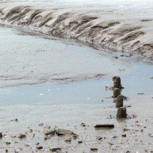 Schönheit Wattenmeer