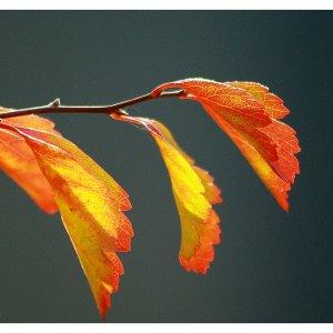 Herbstzweig....