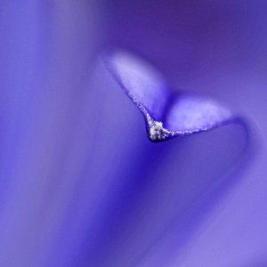 Blue Rhapsodie
