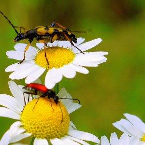 Sommerblumen mit Besuchern