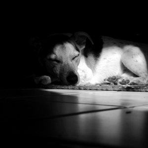 Mein Schattenhund