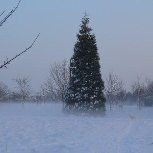 Winter-Wunder-Land