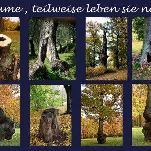 Bäume, teilweise leben sie noch