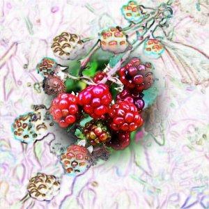 Experiment mit Früchten
