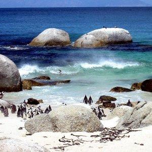 Pinguin-Strand
