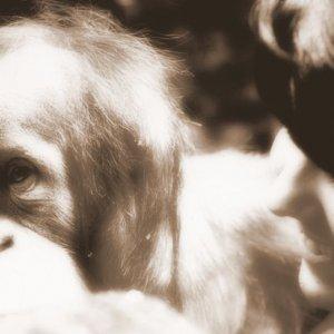 Ein lebendiger Affe in meinem Arm