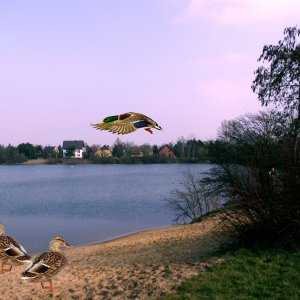 Am Biesdorfer See