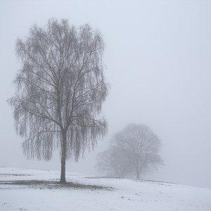 Abschied vom Winter ?