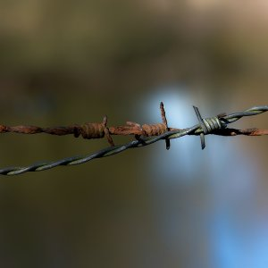 barbed wire....