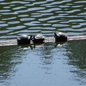 Schildkröten in der Aprilsonne