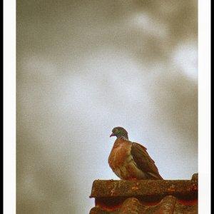 besser eine Taube auf dem Dach, als ein.....