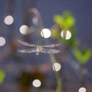 schnelle Flieger