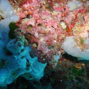 Unterwasser vor Mallorca