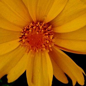 Teil einer Blume.....