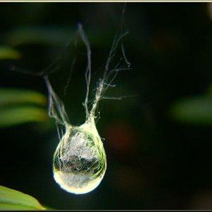 Faszination der Regentropfen